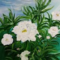 White Peonies by Jacqueline Whitcomb