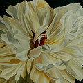 White Peony by Julie Pflanzer