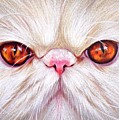 White Persian Cat by Elena Kolotusha