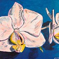 White Phalaenopsis Orchids by Valerie Ornstein