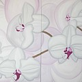 White Pink Orchide by Marinella Owens