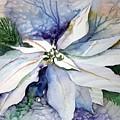 White Poinsettia by Mindy Newman