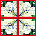 White Poinsettia Quartet by Irina Sztukowski