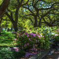 White Point Garden In The Spring by Dale Powell