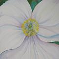 White Poppy by Anna Penny