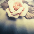 White Porcelain Rose by Jorgo Photography - Wall Art Gallery