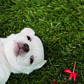 White Puppy by Queso Espinosa