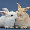 White Rabbit And Sandy Rabbit by Mark Taylor