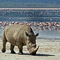 White Rhino And Flamingos by Aivar Mikko