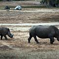 White Rhino's by Robert Meanor