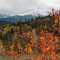 White River National Forest Autumn Panorama by Cascade Colors