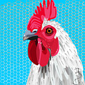 White Rooster With Blue Background by Debra Baldwin