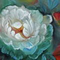 White Rose by Jenny Lee