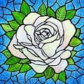 White Rose  by Jim Harris