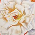 White Rose by Lin Petershagen