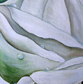 White Rose by Nataliia Fialko