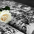 White Rose On Grave For Memorial Day by James Brunker