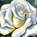 White Rose Two by Linda Mears