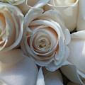 White Roses by Stacy Devanney