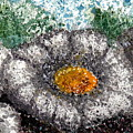 White Saguaro Cactus Blossom by Cynthia Ann Swan