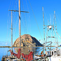 White Sail Boat Morro Rock  by Barbara Snyder