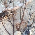 White Sand Beach Finds by Ann Sokolovich