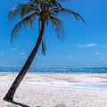 White Sand Beaches And Tropical Blue Skies by James BO Insogna