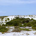 White Sand Dunes And Blue Skies by Tina B Hamilton