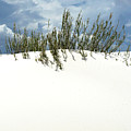 White Sand Green Grass Blue Sky by Joe Kozlowski