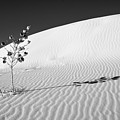 White Sands 4 by Lou  Novick