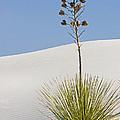 White Sands National Monument, Nm by Millard H. Sharp