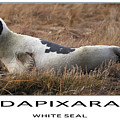 White Seal  by Dapixara Art