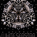 White Seastar by Nancy Griswold