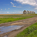 White Sheds On A Prairie Farm In Spring by Louise Heusinkveld