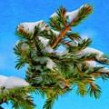 White Snow On Evergreen by Jeffrey Kolker