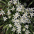 White Spring Flowers by Rebecca Pavelka