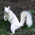 White Squirrel by Robert E Alter Reflections of Infinity