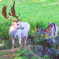 White Stag And Hind 2 by Roy Pedersen