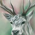 White Stag by MM Anderson