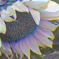 White Sunflower by Vicky Brago-Mitchell