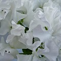 White Sweetpeas by Joan-Violet Stretch