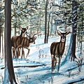 White Tail Deer In Winter by Patricia L Davidson