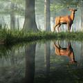 White Tailed Deer Reflected by Daniel Eskridge