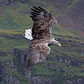 White-tailed Eagle Banks by Peter Walkden