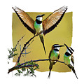 White Throated Bee Eater Pf by Ronald Bolokofsky