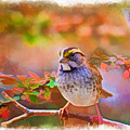 White Throated Sparrow - Digital Paint 3 by Debbie Portwood