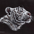 White Tiger Cub by Sarah Stribbling