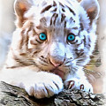 White Tiger Cub by Sergey Lukashin