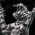 White Tiger Featured In Greece Exhibition by Jijo George