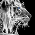 White Tiger by Shane Bechler